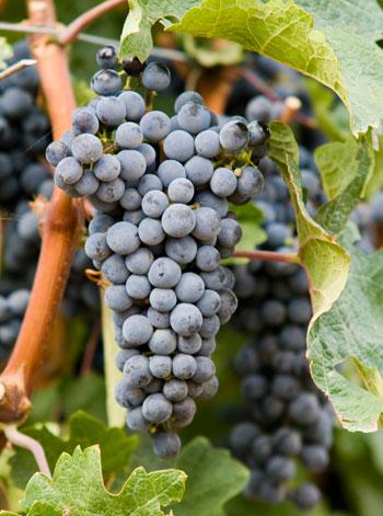 agriturismo produzione vini bolgheri